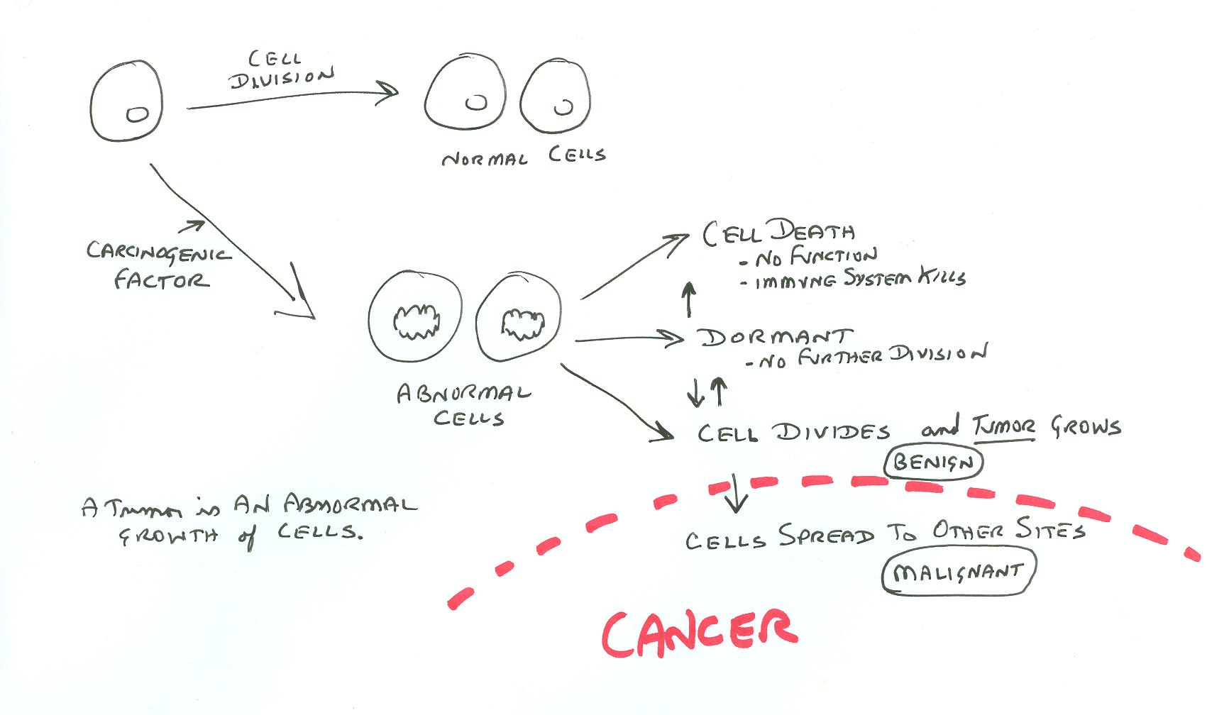 diagram forming cancer cell